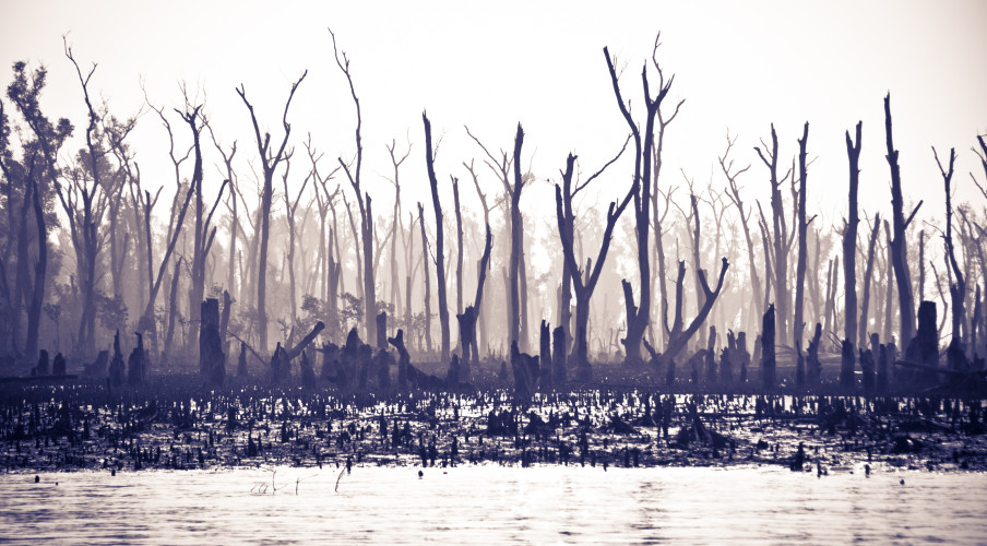 The Sundarban devastated by Hurricane Aila. Photo: Katie Musgrave